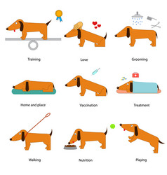 cartoon caring for dog set vector image vector image