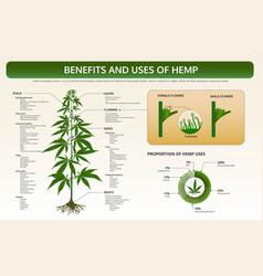 Benefits and uses hemp horizontal textbook vector