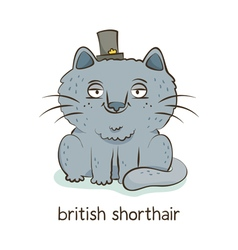 British shorthair Cat character isolated on white vector image