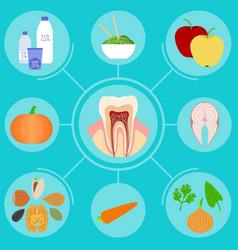 Food helpful for healthy teeth vector
