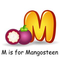 fruit alphabet m is for mangosteen vector image