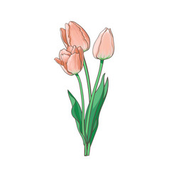 tulip bouquet set isolated vector image vector image