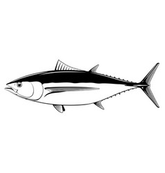 albacore tuna fish black and white vector image