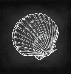 Chalk sketch of scallop vector