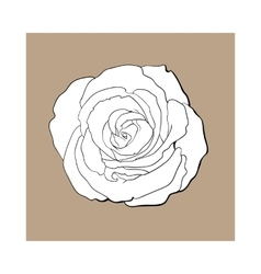 Deep contour rose top view isolated sketch vector image