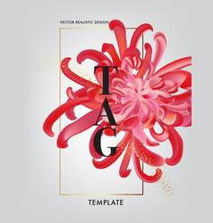 elegant chrysanthemum brochure greeting card vector image