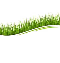 Green grass lawn wave isolated on white Floral eco vector image