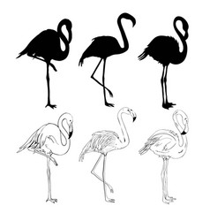 Hand drawing flamingos vector