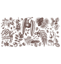 nut trees and plants collection hand drawn pecan vector image