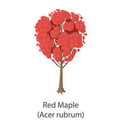 Red maple icon flat style vector