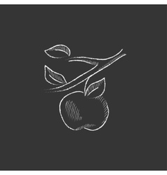 Apple harvest Drawn in chalk icon vector image
