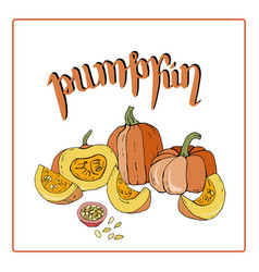 card or a leaflet with pumpkins vector image