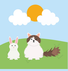 cute little rabbit and cat in field vector image