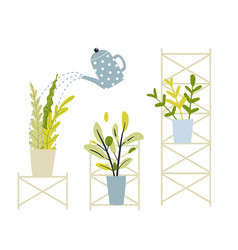 flowers in pots standing on shelving gardening vector image