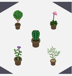 Isometric flower set of fern grower peyote and vector