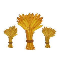 Sheaves of wheat on white background vector