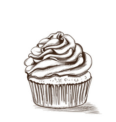 cupcake line art delicious dessert isolated on vector image