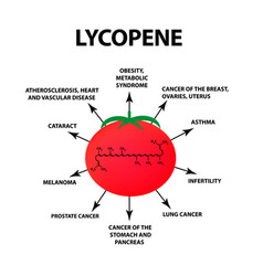 lycopene treats the disease tomato vector image