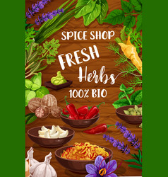 Spices culinary herbs and food condiments vector