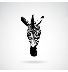 zebra face on white background wild animals vector image vector image