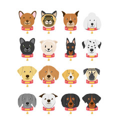 Group of dog breeds and cat vector