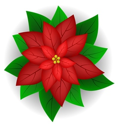 Poinsettia flower vector image