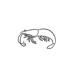 shrimp hand drawn sketch icon vector image