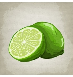 fresh limes vector image