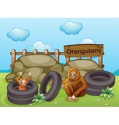 Two orangutans near the big rocks vector