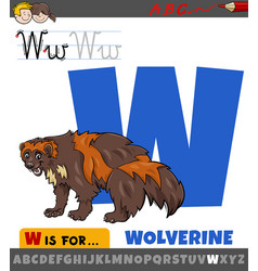 Letter w from alphabet with cartoon wolverine vector