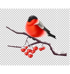 realistic bullfinch bird at branch xmas vector image