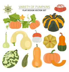 variety of pumpkins flat design set vector image