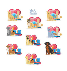 pet shop veterinary elements vector image vector image