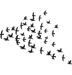 A Flock of Birds vector