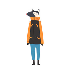 Badger wearing warm winter clothes male humanized vector