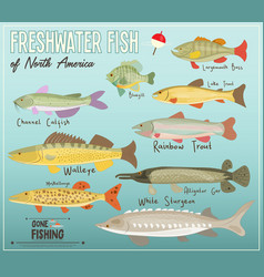 Freshwater fish of north america vector