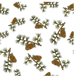 larch cones and branches vector image