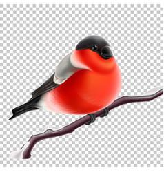 Realistic bullfinch bird at branch xmas vector