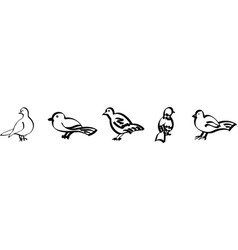 stylized birds set vector image