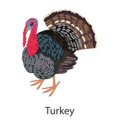 Turkey icon isometric style vector