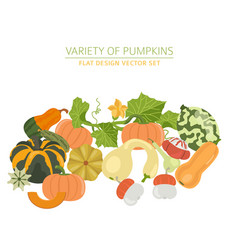 variety of pumpkins flat design set vector image