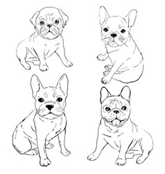 English bulldog french bulldog dog on a white vector