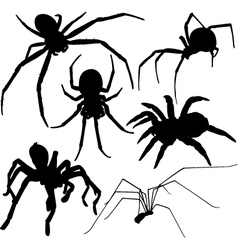 Spider silhouettes on white background vector