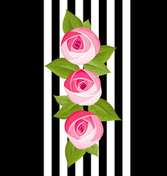 three beautiful flower deep pink rose vector image
