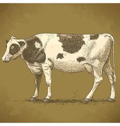 engraving cow retro vector image vector image