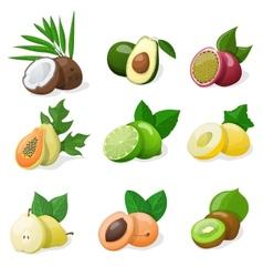 Set of exotic fruit vector