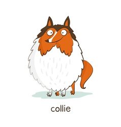 Collie Dog character isolated on white vector image