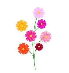 Assorted Cosmos Flowers on A White Background vector