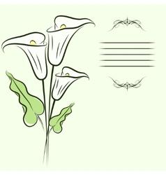 Callas background vector image