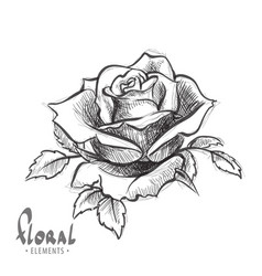 dissolve rose on a white background vector image